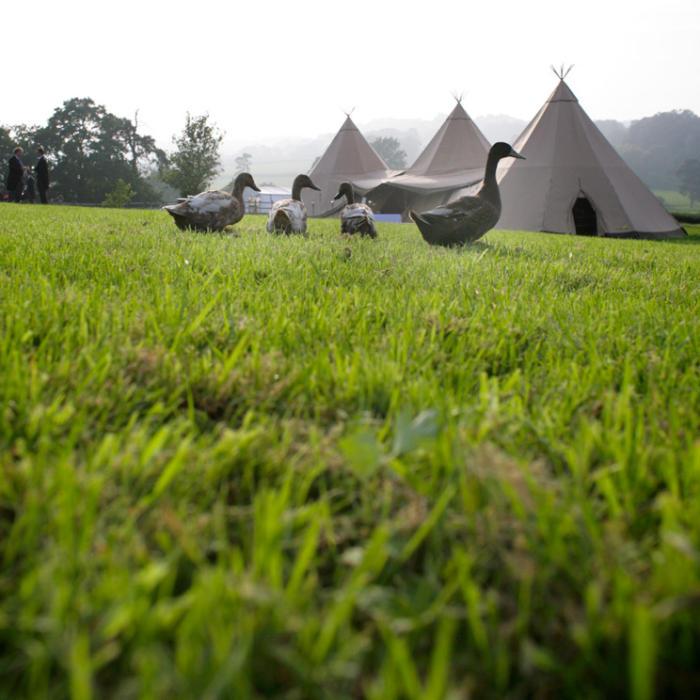 ducks, eco-friendly wedding, green wedding, tipi, marquee hire